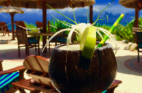 Drinks in a coconut